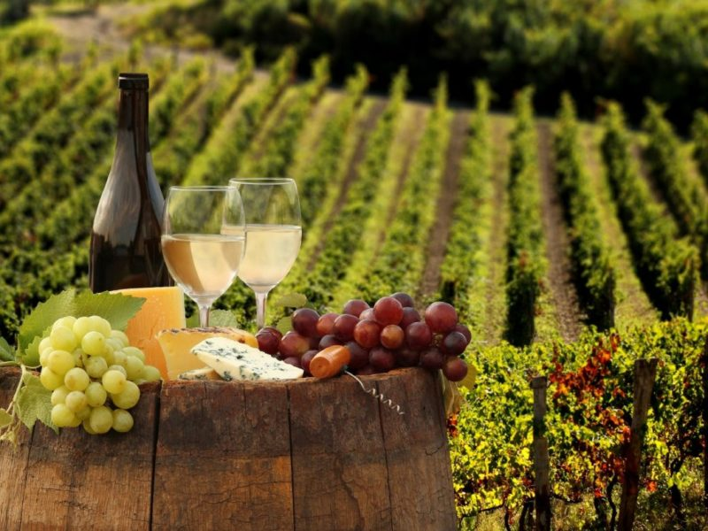 wine tour strada del prosecco degustazione vini colline di conegliano wine tour vigneti alpago degustazioni vini biologici assaggi prodotti tipici
